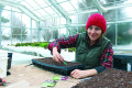ALBION HILLS COMMUNITY FARM is once again preparing to offer its Community Supported Agriculture share initiative to the public. Above, Farm Manager Shannon Lee Stirling is pictured seeding eggplant at the organization's greenhouse just east of Orangeville.